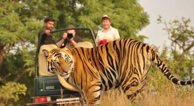 Empfohlene Individualreise, Rundreise: Indien Safari – auf den Spuren des Königstigers