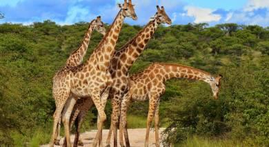Empfohlene Individualreise, Rundreise: Ungezähmte Wildnis – die Höhepunkte von Kenia und Tansania