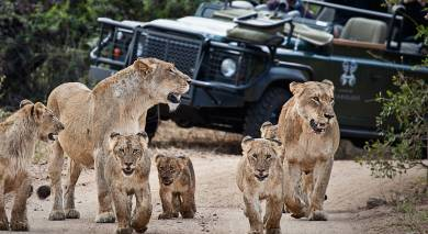Example private tour: South Africa Safari Magic
