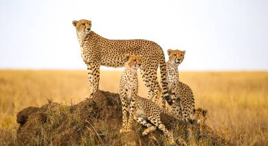 Empfohlene Individualreise, Rundreise: Tansania – Maasai-Kultur, Safaris und Sansibar