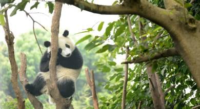 Empfohlene Individualreise, Rundreise: China – Geheimnisse des Südwestens