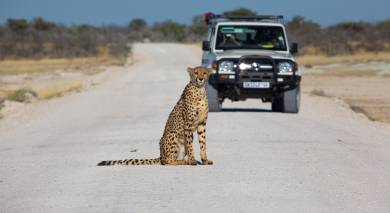 Example private tour: Road Trip: Desert Adventure, Waterfalls and Safari Magic