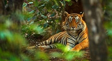 Example private tour: Tiger Safari in India and the Taj Mahal