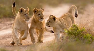 Empfohlene Individualreise, Rundreise: Südafrika Rundreise – Höhepunkte der Kapregion