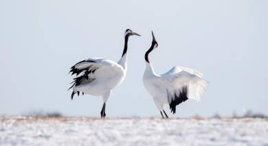 Example private tour: Japan: Hokkaido's Wildlife and Lake Toya