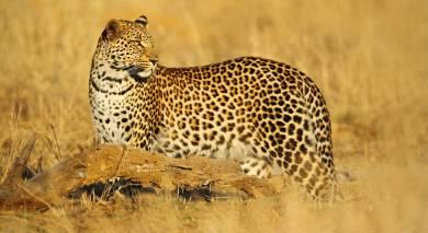 Empfohlene Individualreise, Rundreise: Safari-Klassiker in Simbabwe und Botswana