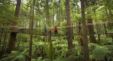 Example private tour: Road Trip: North Island Discovery