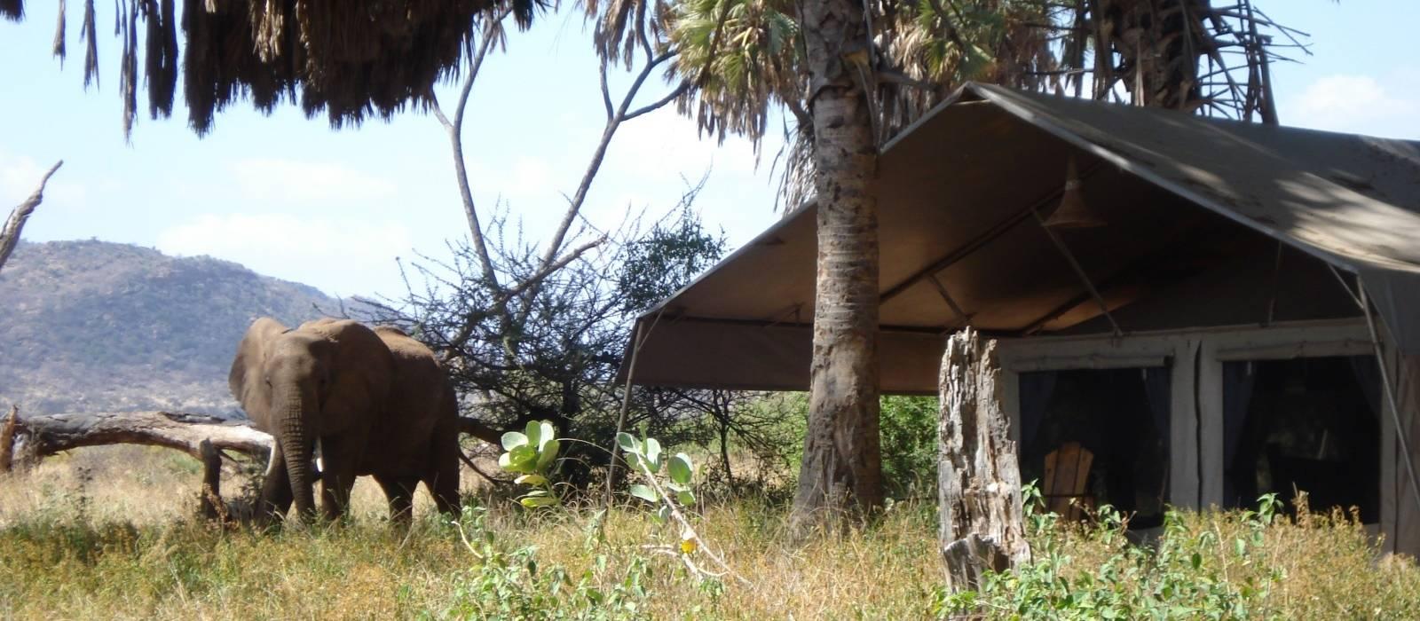 Elephant Bedroom Camp Hotel Enchanting Travels