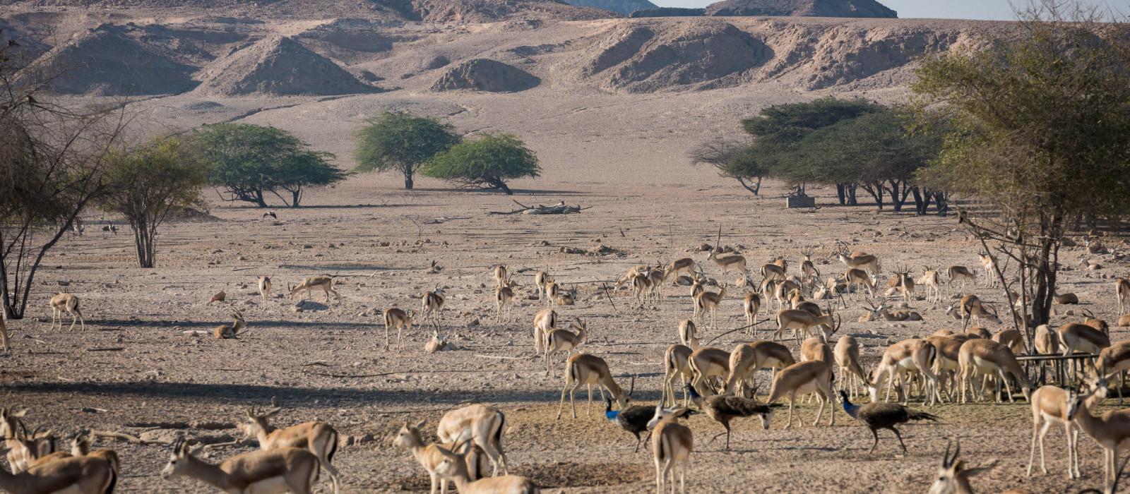 Reiseziel Sir Bani Yas Insel Vereinigte Arabische Emirate