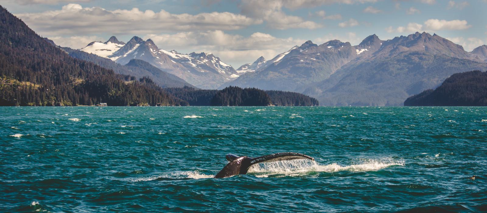 Reiseziel Homer Alaska