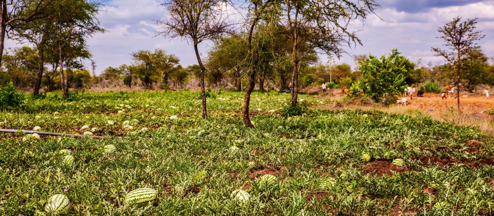 Reiseziel Migori Kenia