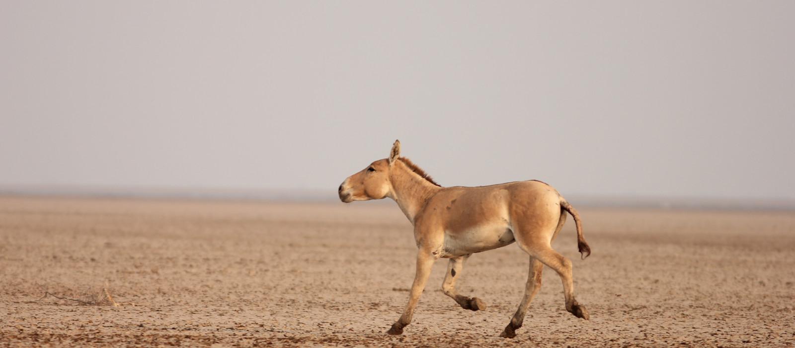 Reiseziel Bajana (Little Rann of Kutch) Nordindien