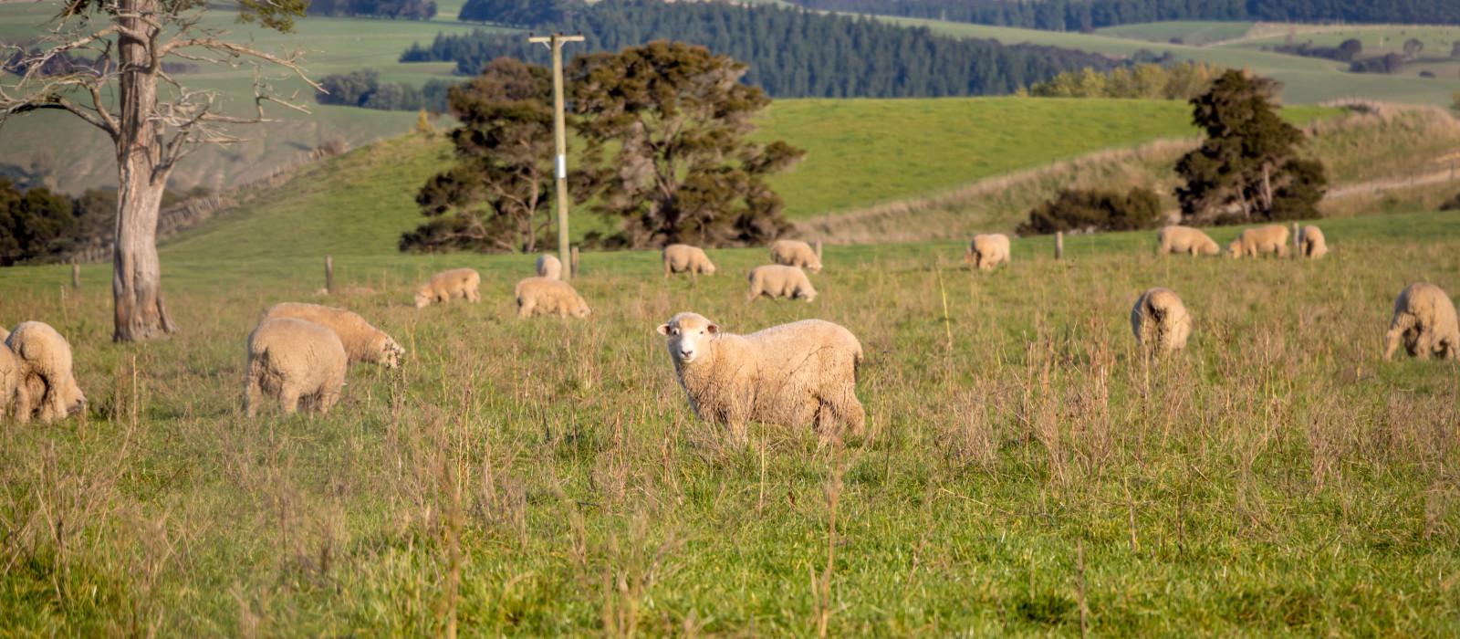 Reiseziel Martinborough Neuseeland
