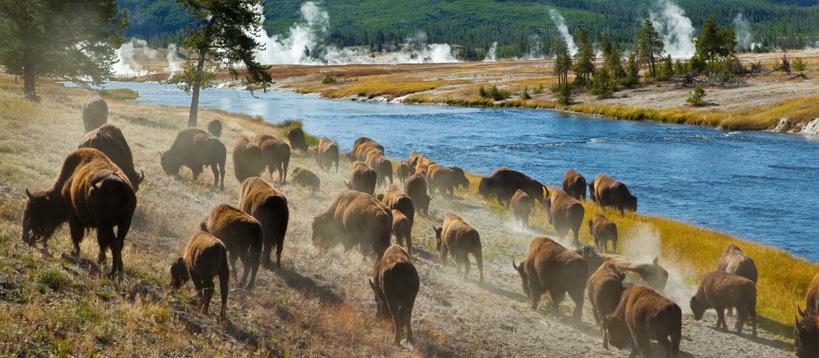 Reiseziel Yellowstone Nationalpark USA