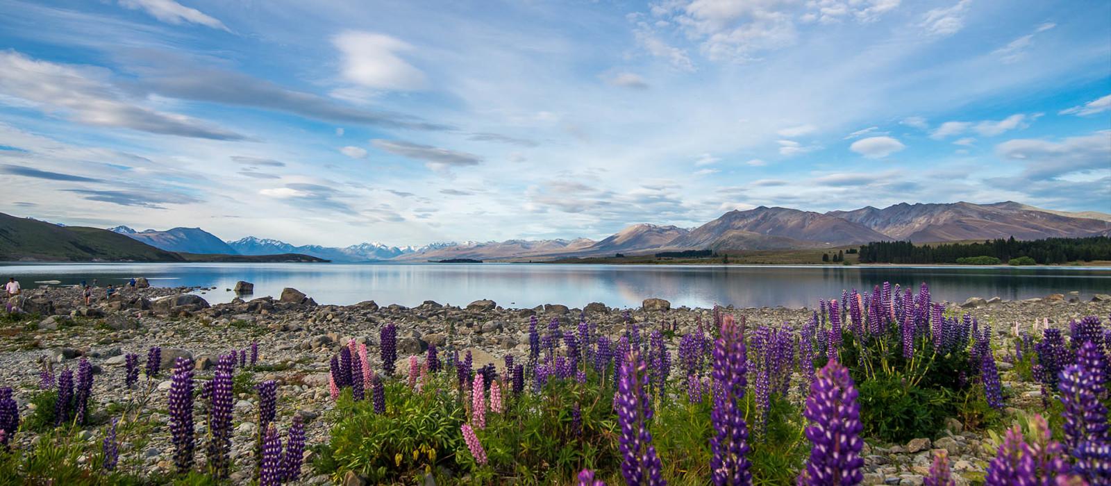 Reiseziel Tekapo Neuseeland