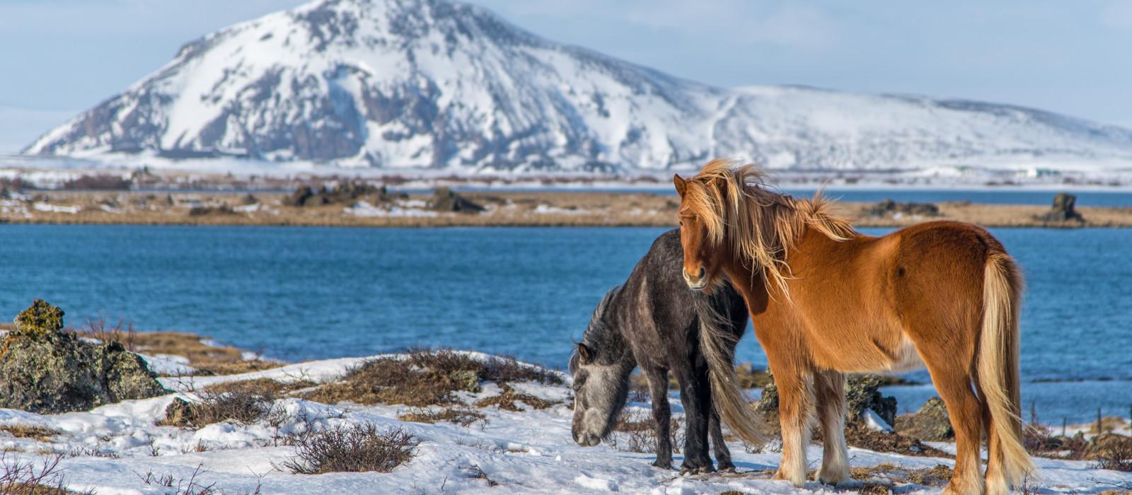 Reiseziel Mývatn-See Island