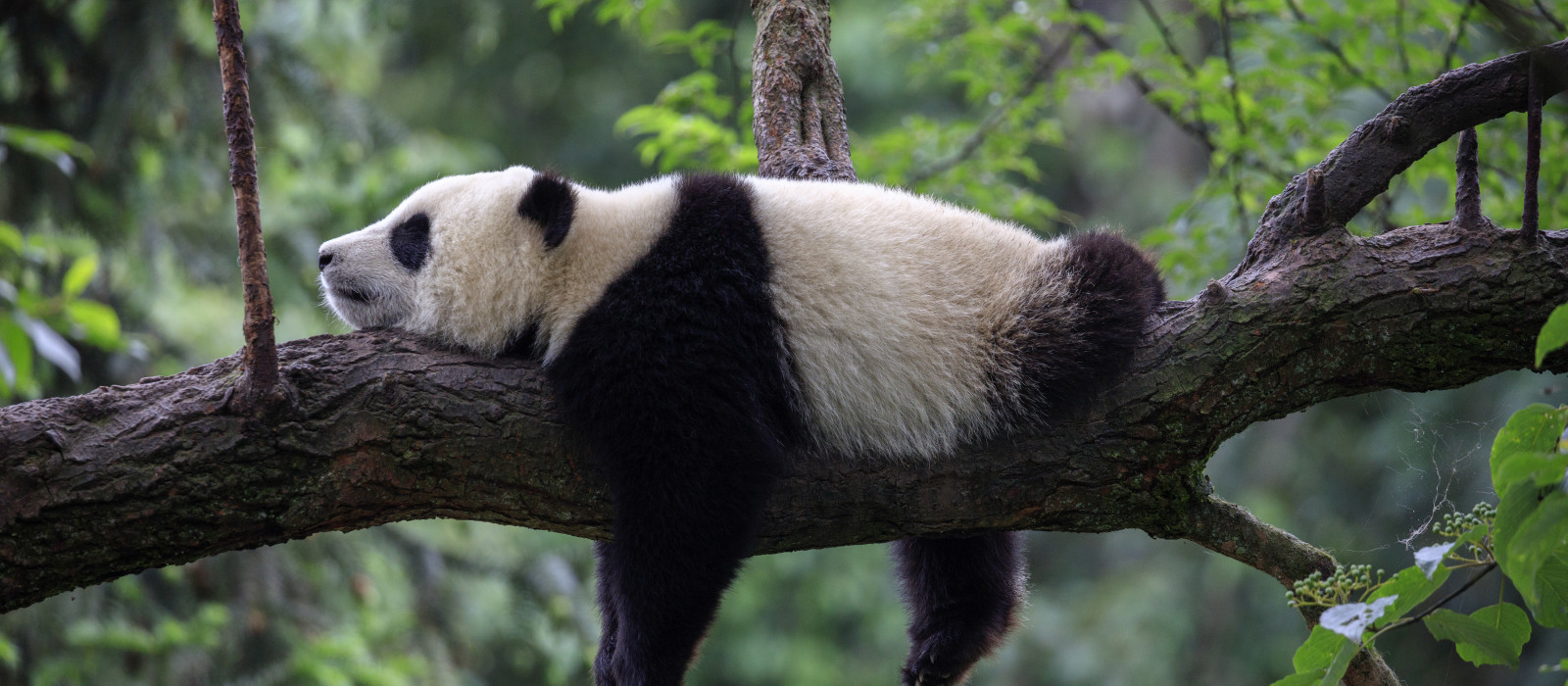 Reiseziel Chengdu China