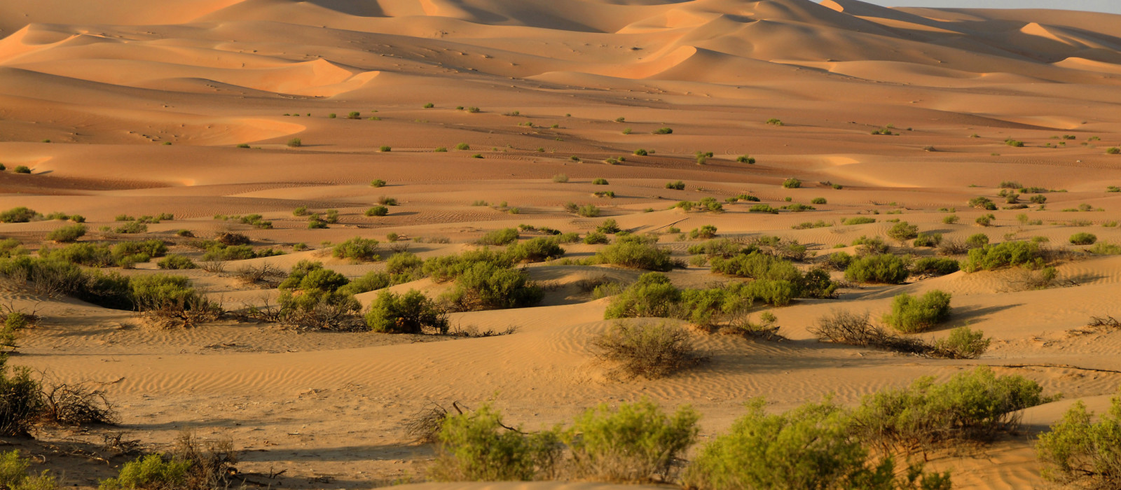 Destination Liwa United Arab Emirates