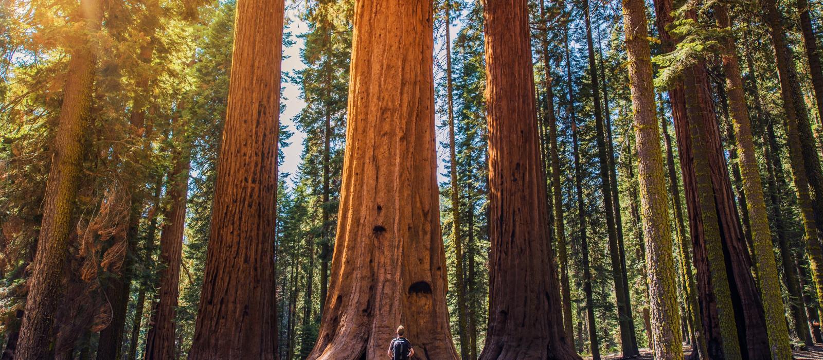 Destination Sequoia National Park USA