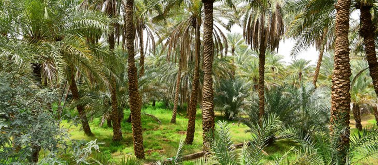 Reiseziel Al Ain Vereinigte Arabische Emirate
