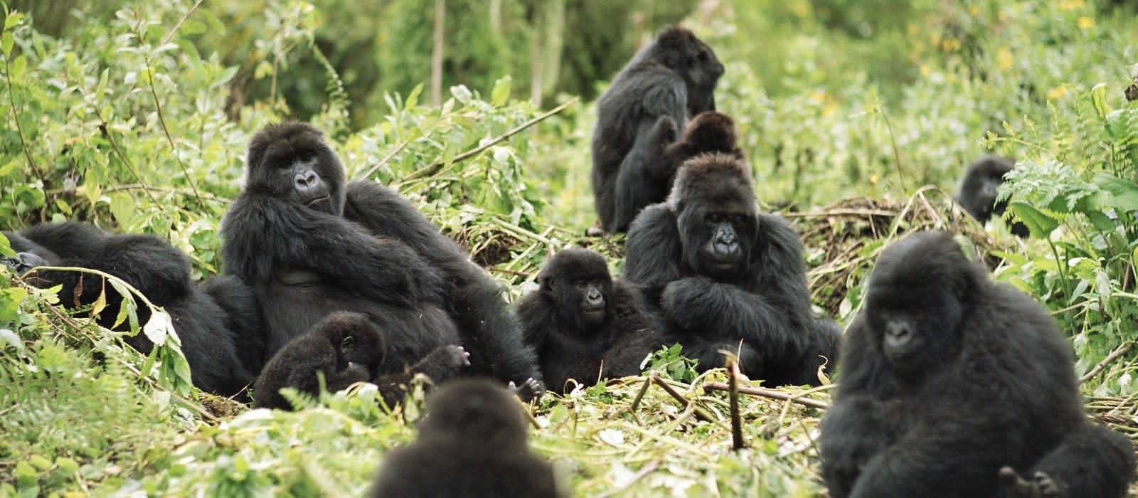 Hotel Mountain Gorilla View Lodge Ruanda