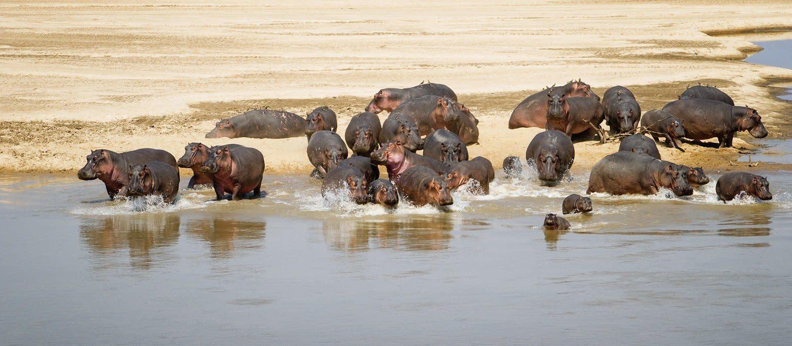 Reiseziel North Luangwa Sambia