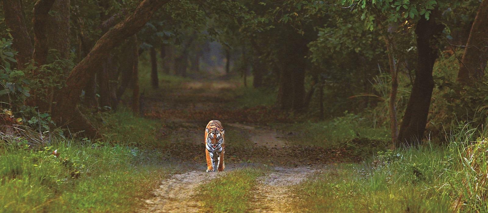 Reiseziel Dudhwa National Park Nordindien