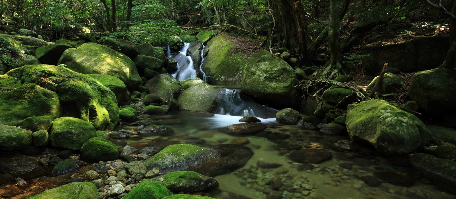 Reiseziel Yakushima Japan