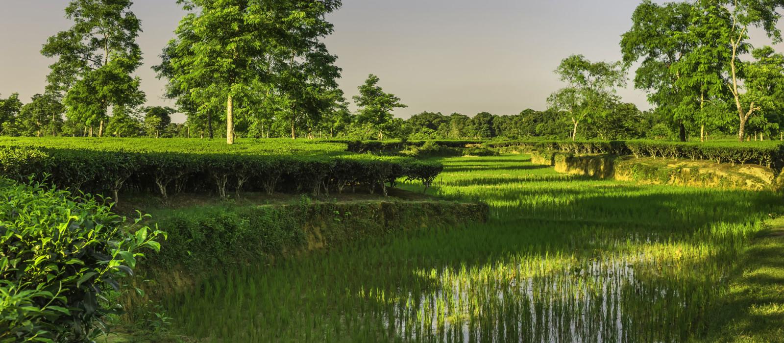Reiseziel Jorhat Ostindien