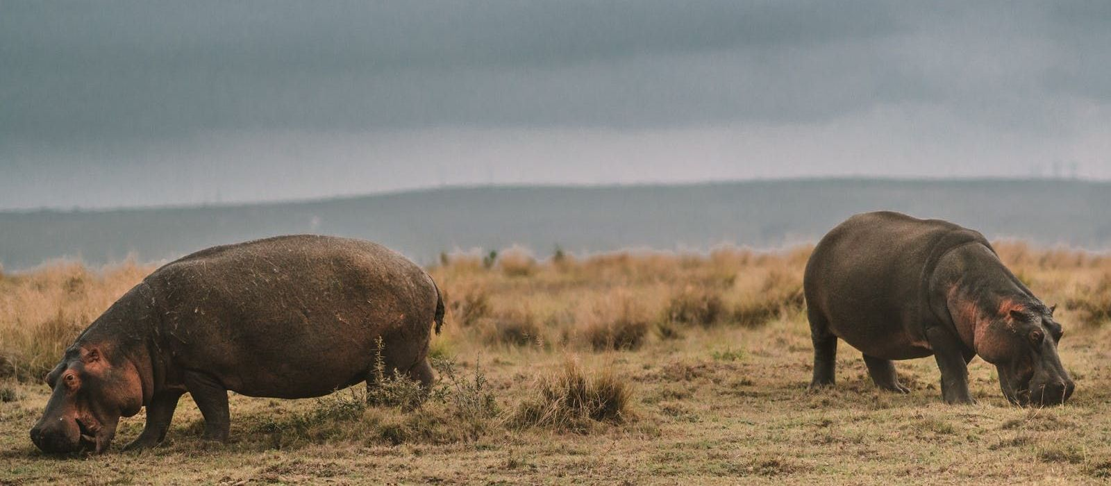Reiseziel Gondwana-Wildreservat Südafrika