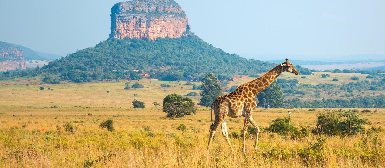 Reiseziel Entabeni Wildschutzgebiet Südafrika