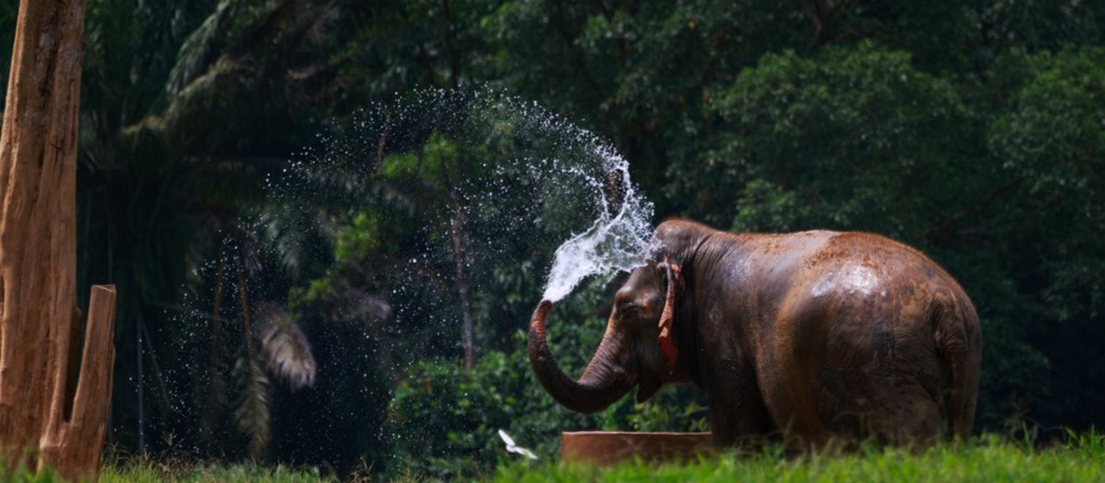 Hotel Elephant Hills Tented Camp Thailand