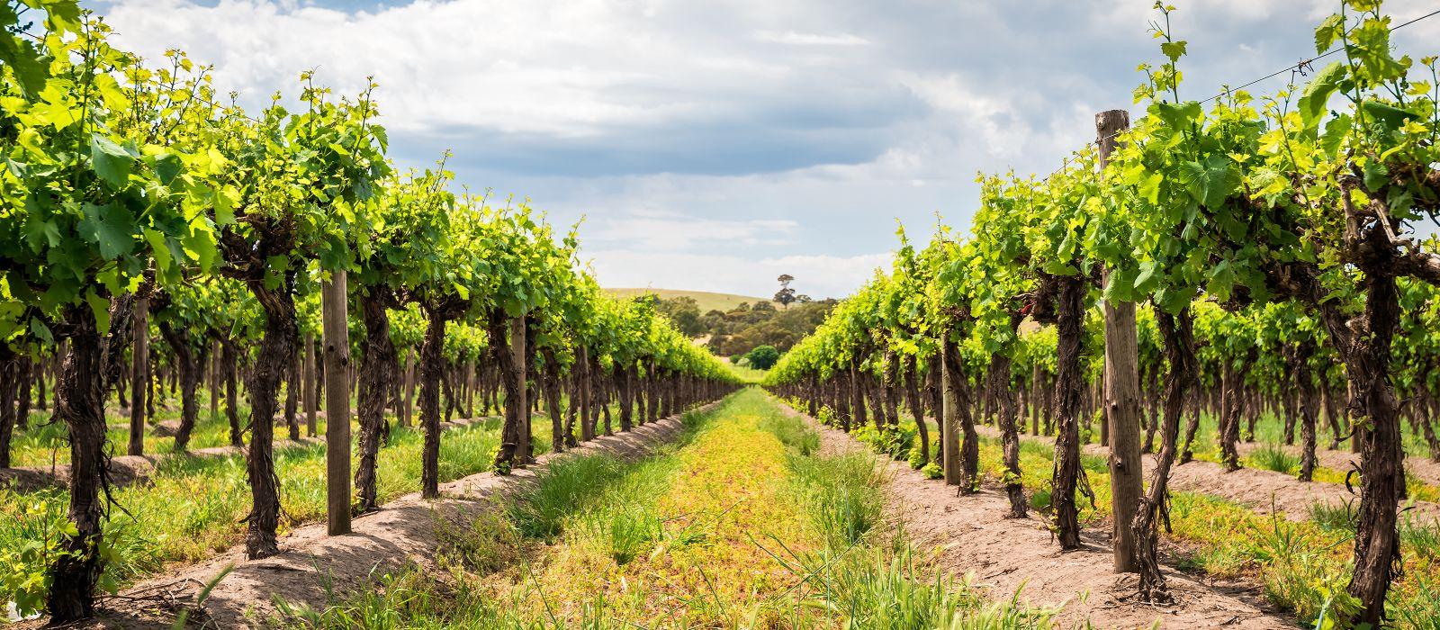 Destination Barossa Valley Australia