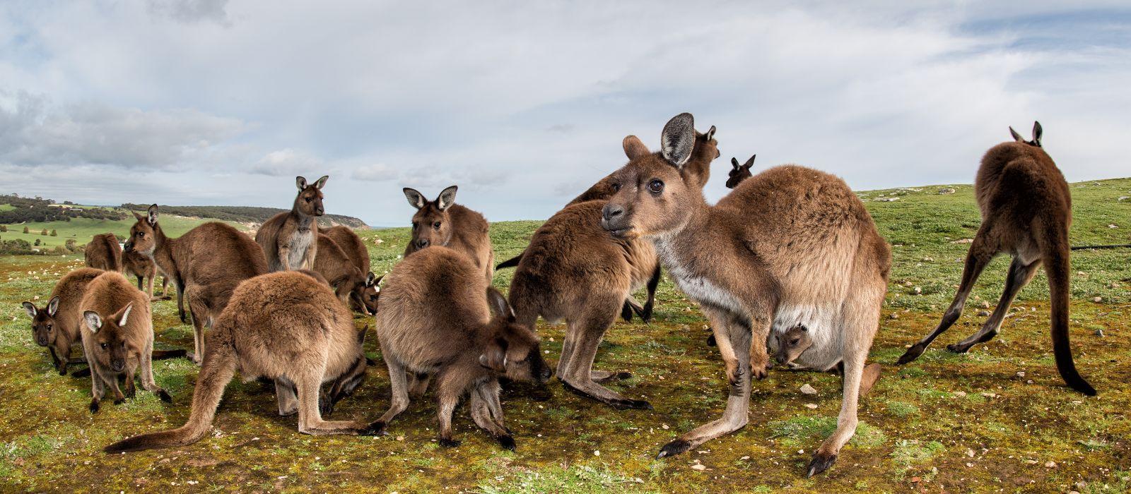 Reiseziel Kangaroo Island Australien