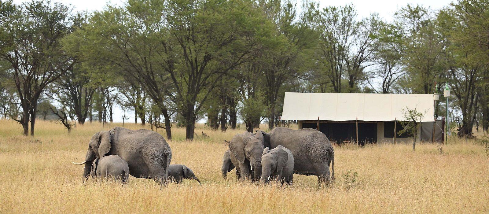 Hotel Kimondo Migration Camp Tansania