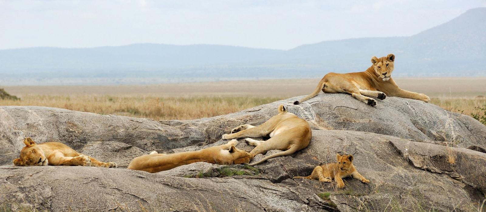 Reiseziel Westliche Serengeti Tansania