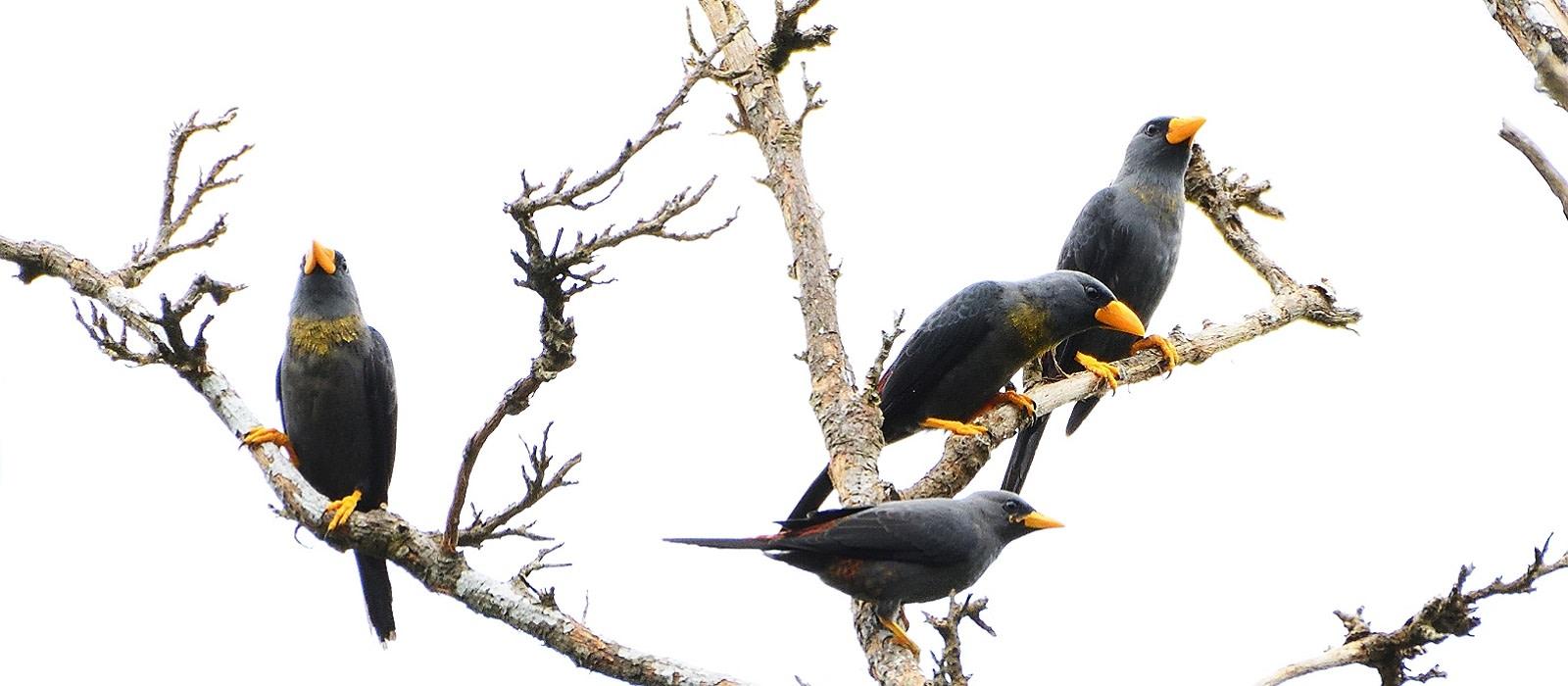 Reiseziel Tangkoko Batuangus Naturschutzgebiet Indonesien
