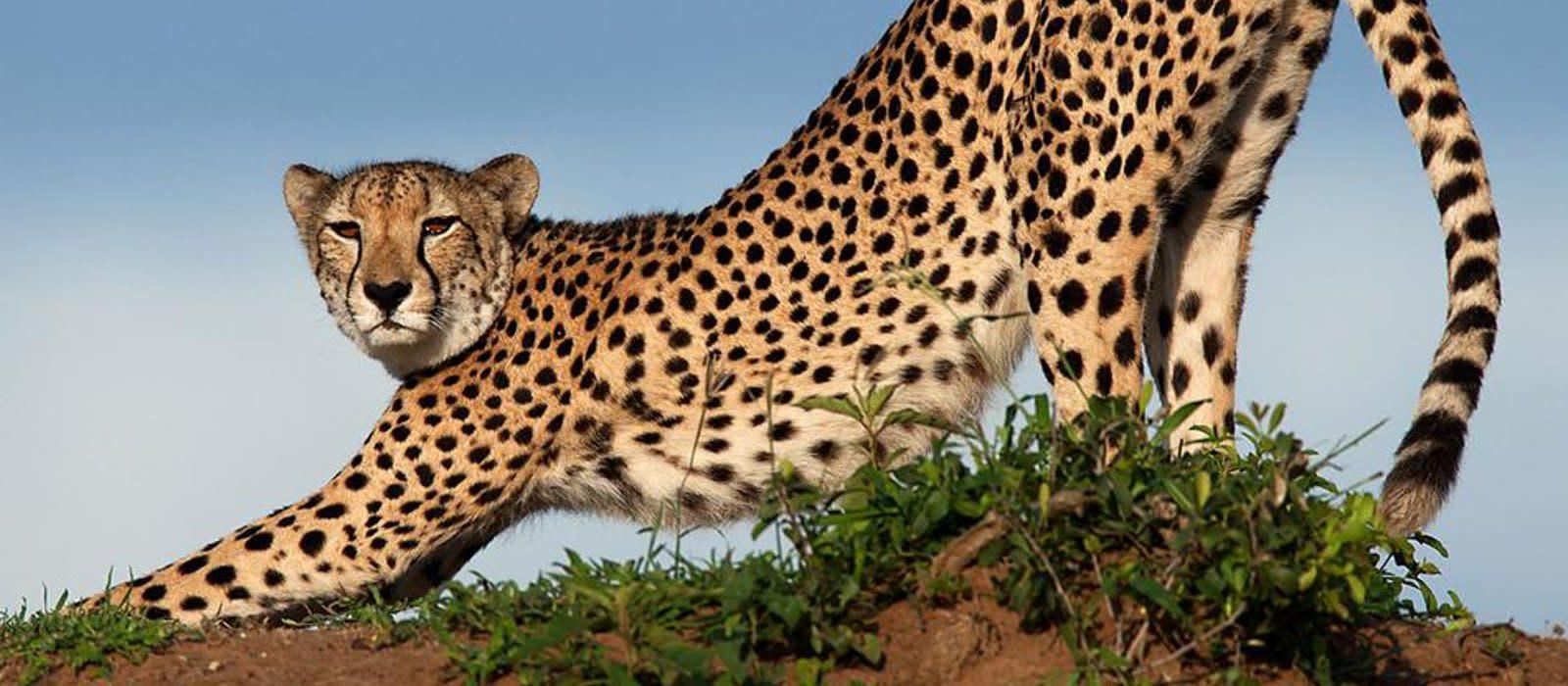 Reiseziel Phinda Wildschutzgebiet Südafrika