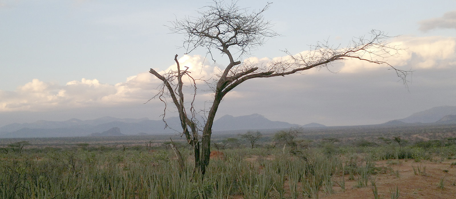 Reiseziel Laikipia Community Reserves Kenia