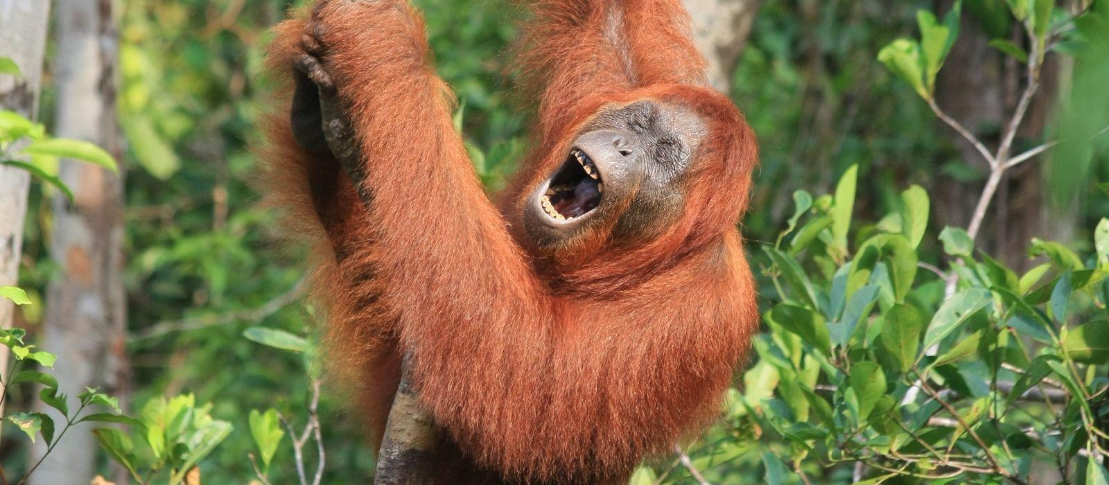 Reiseziel Borneo, Tanjung Puting National Park Indonesien