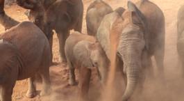 Destination Sera Conservancy Kenya