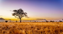 Destination Central Kruger South Africa