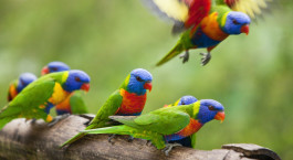 Reiseziel Atherton Tablelands Australien