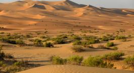 Destination Liwa United Arab Emirates