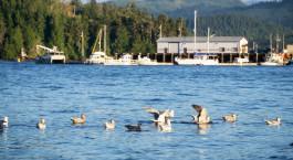 Reiseziel Port Hardy Kanada