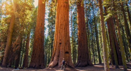 Destination Sequoia National Park USA