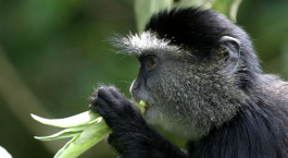 Destination Kakamega Forest Kenya