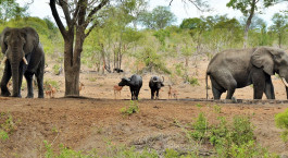 Reiseziel Südliche Krüger-Region Südafrika