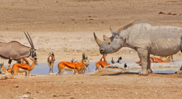 Reiseziel Etosha (Anderson Gate) Namibia