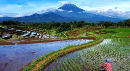 Reiseziel Java, Magelang Indonesien